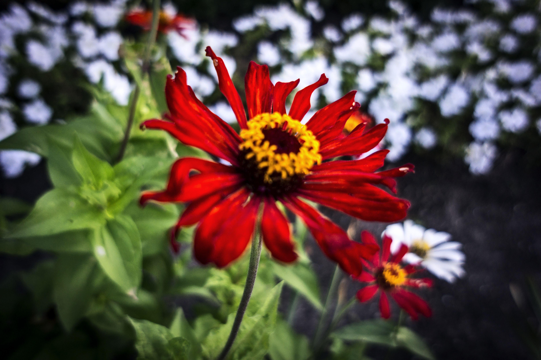 Night Flower 4