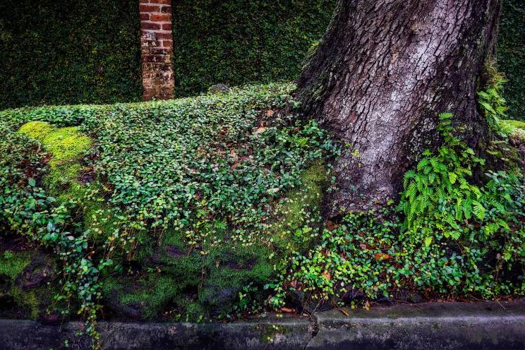 Green. This is what happens when you live in a hothouse called New Orleans.