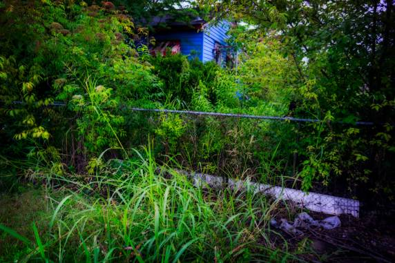 Nature always wins. An abandoned and overgrown house in Algiers Point.