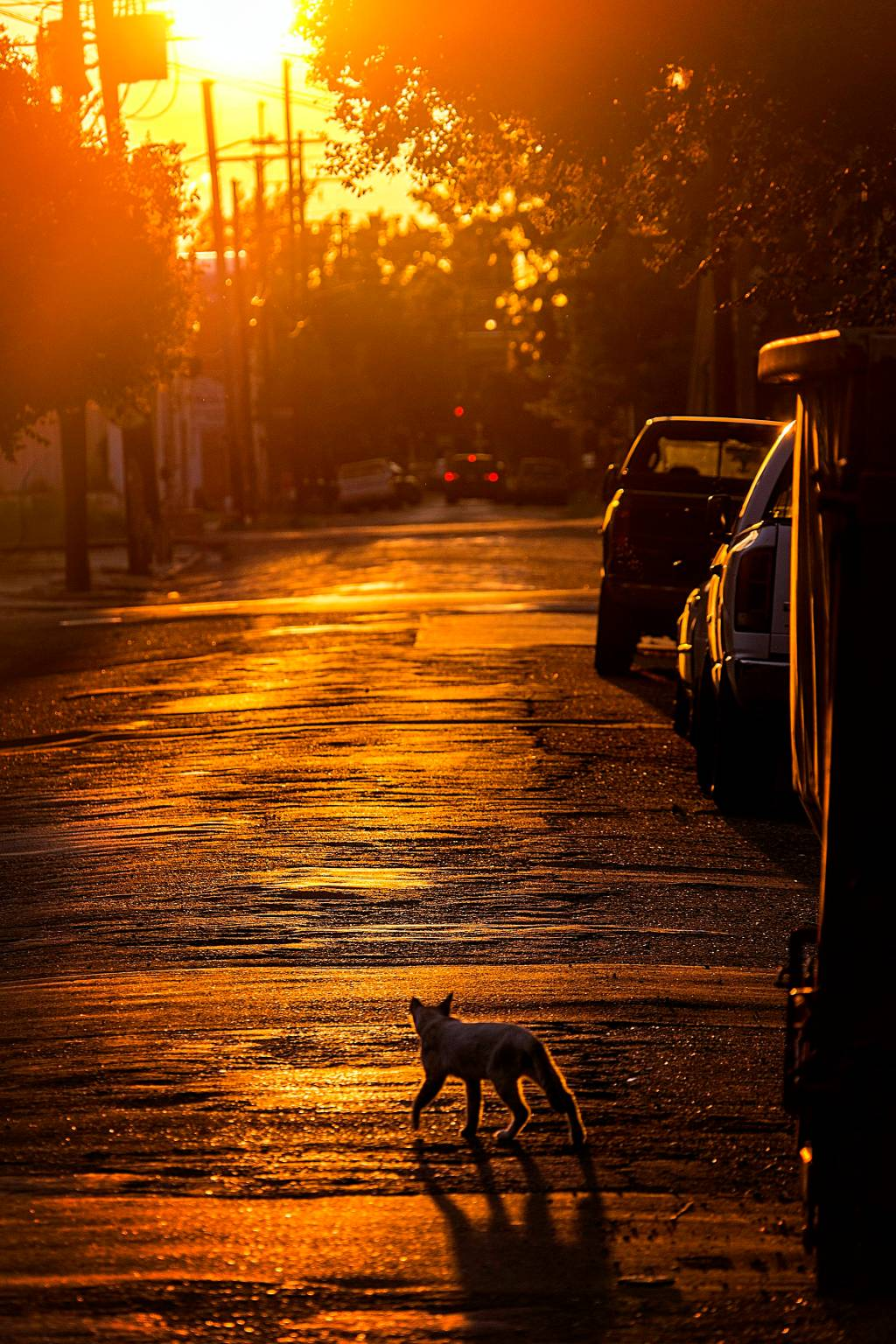 A cat takes a stroll on a hot summer sunset.