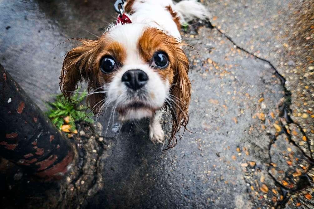 Little Miss Cute.