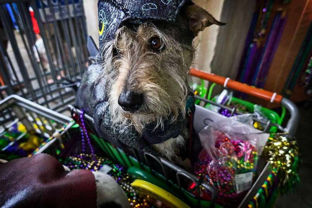 The president of Barkus' dog.
