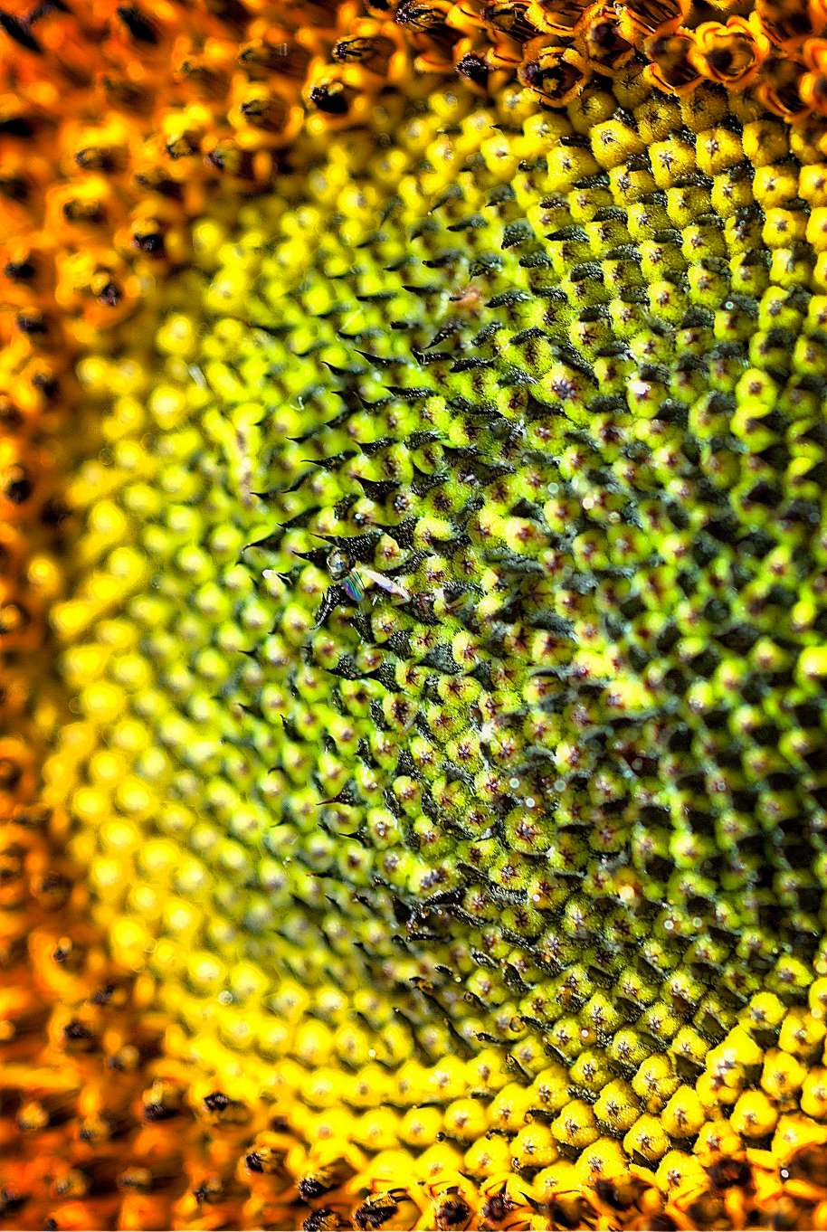 Details of the bright yellow picture.