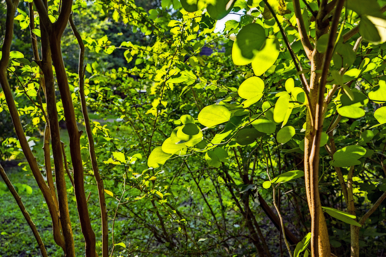 Summertime light and leaves.