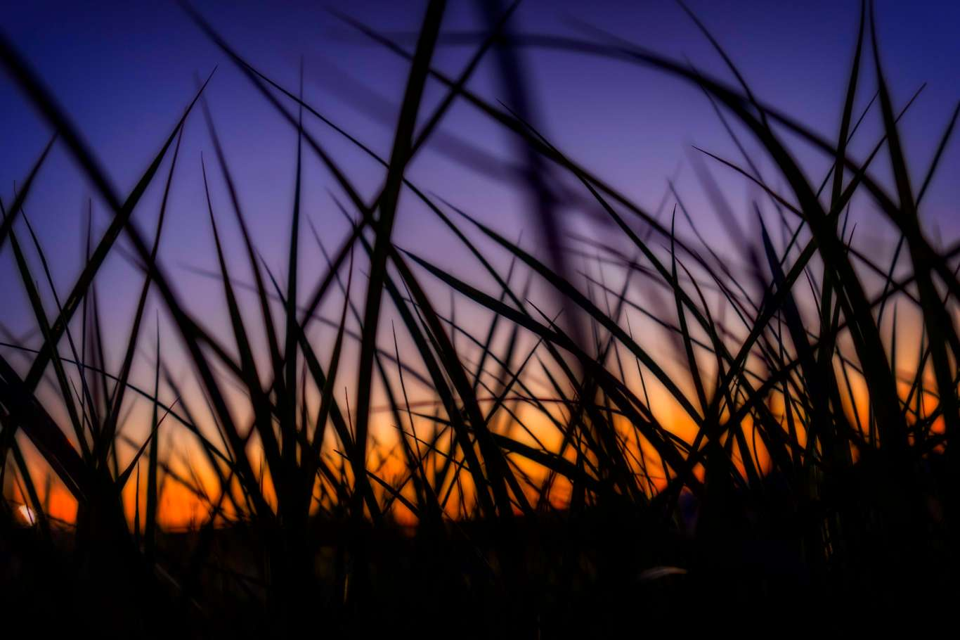 Summer grass at sunset.
