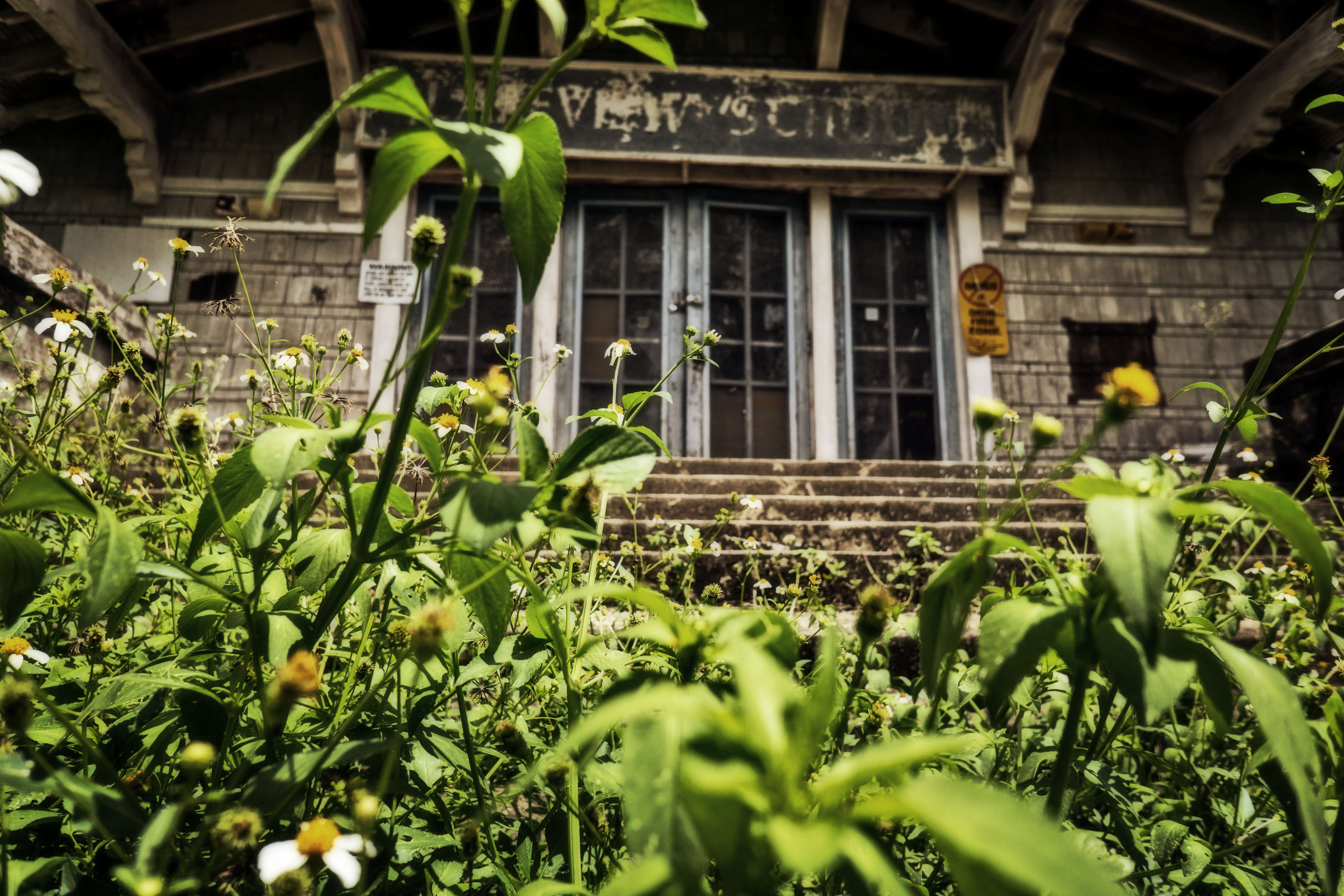 Lakeview School, abandoned and overgrown.