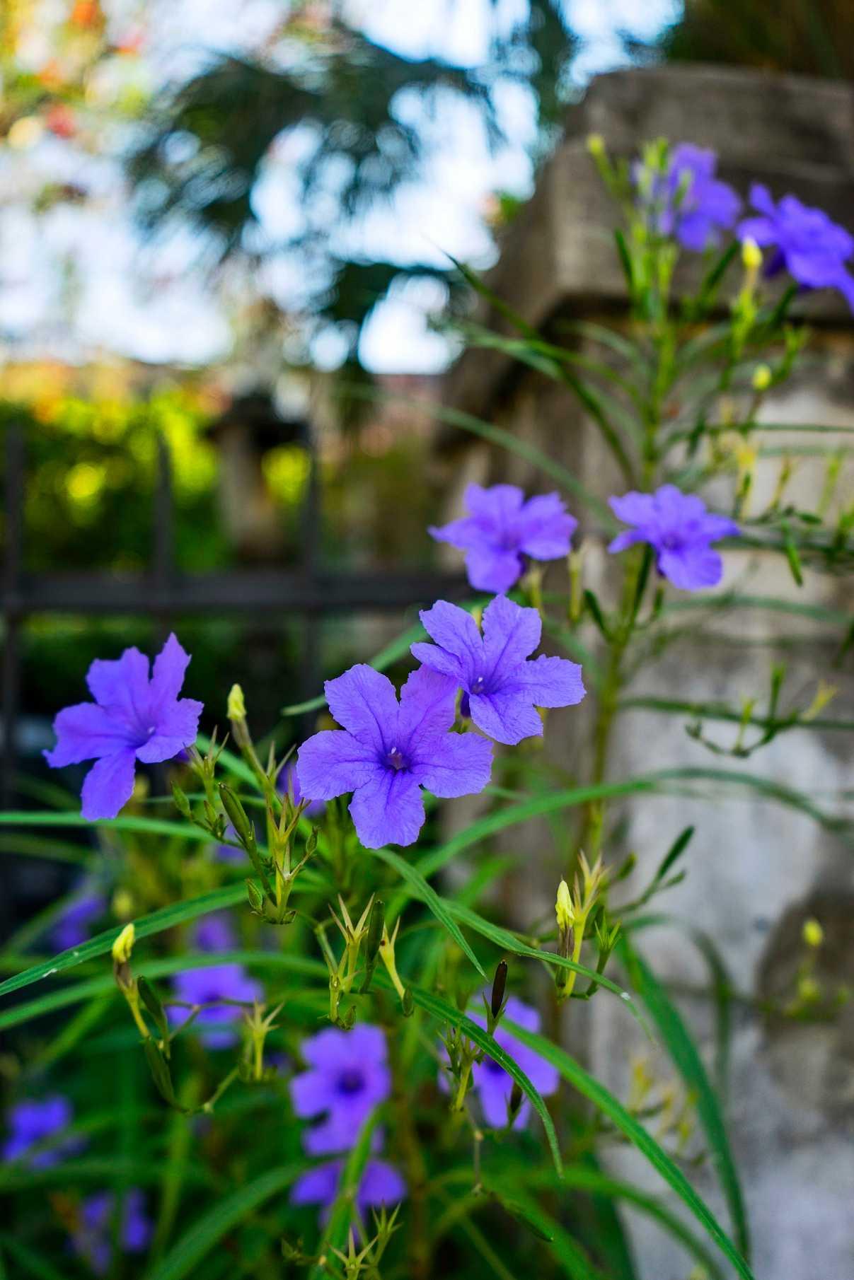 French Quarter Flowers