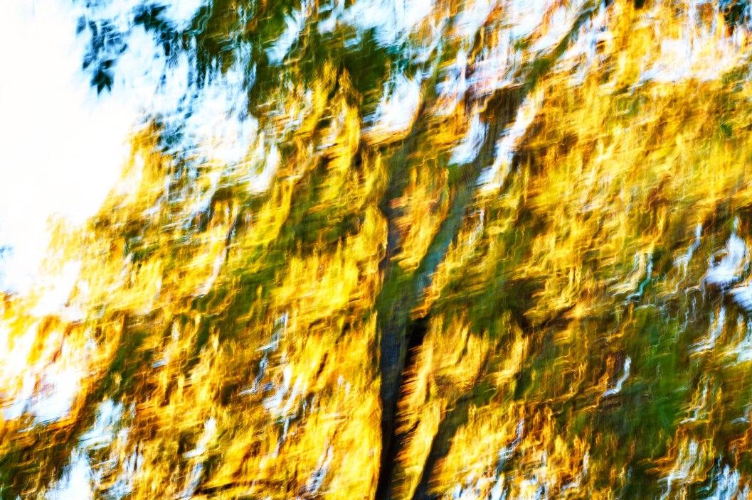 Shimmering Tree.