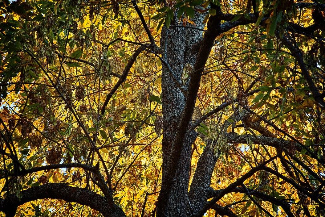 Fall in Southeast Louisiana
