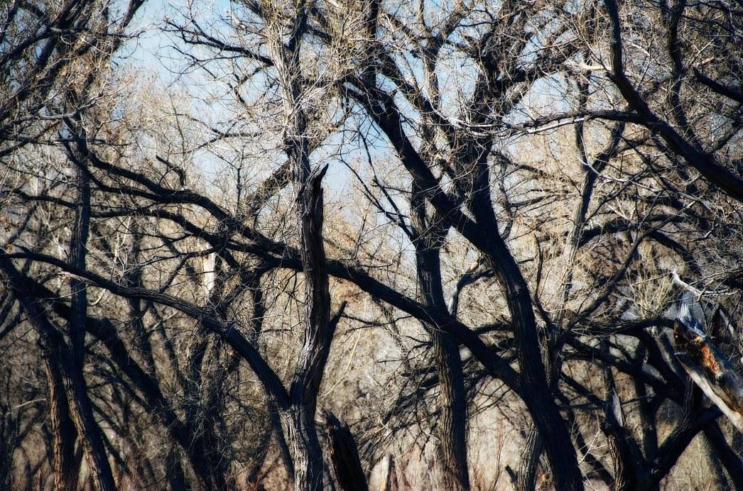 Burned Trees.