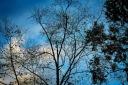 Winter trees. Winter light.