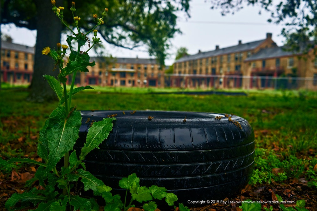 Tires and the Magnolia Housing Projects