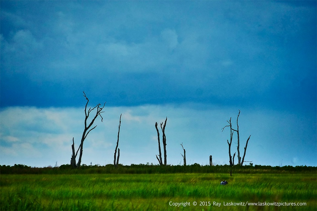 Broken trees.