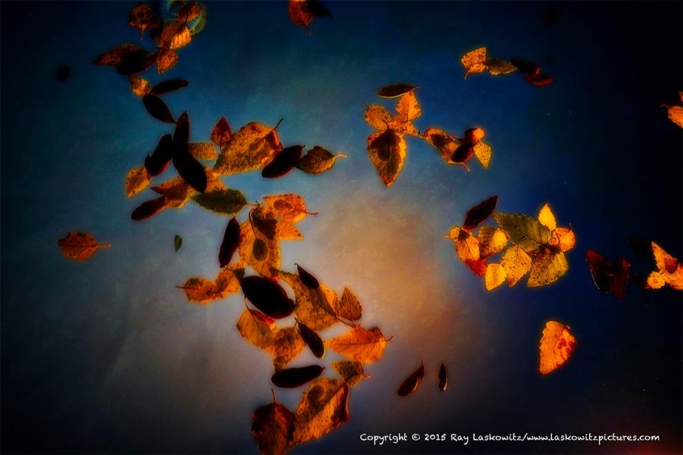 Leaves, Water, Night