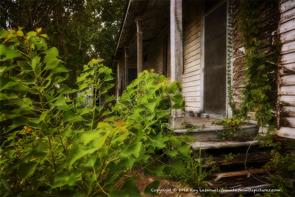 Summer growth at an abandoned house.