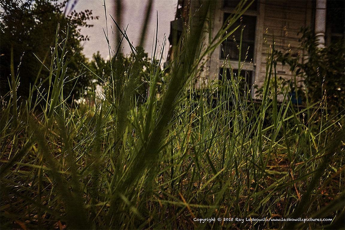 Left in the weeds.