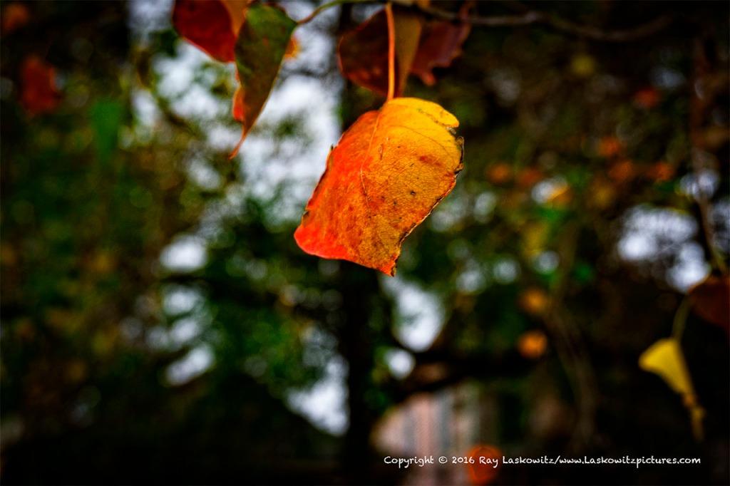 Like a fall leaf.