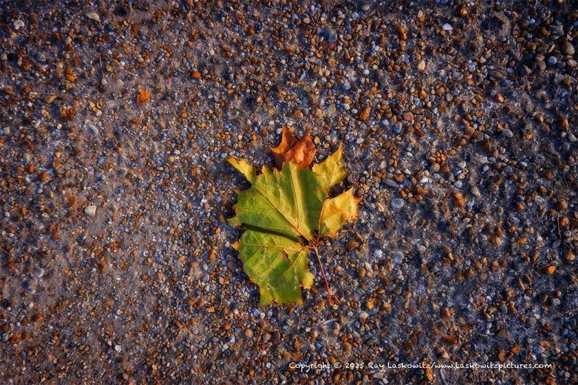 A Fall leaf... sorta.