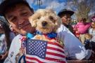 Dog of America.
