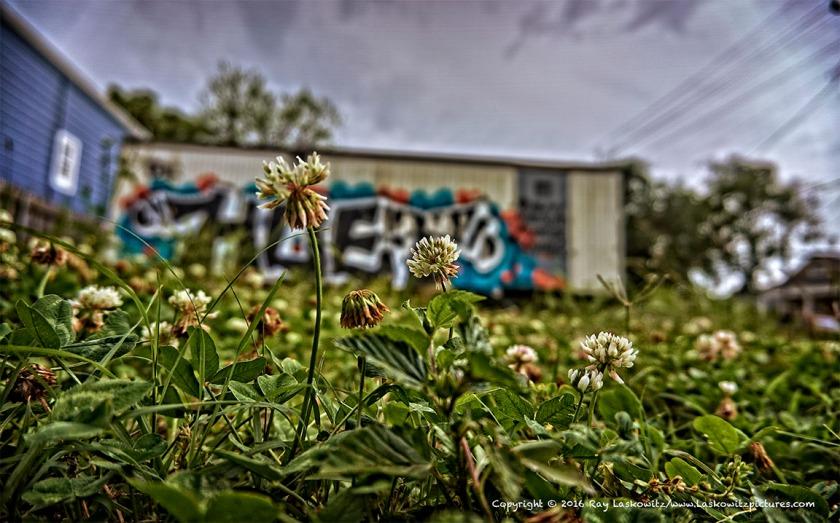 Mid  City Spring