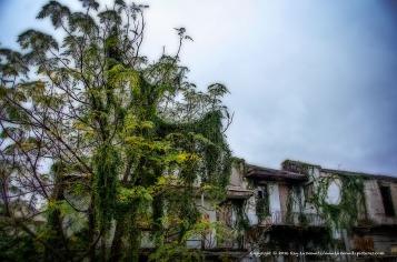 Swampy New Orleans.