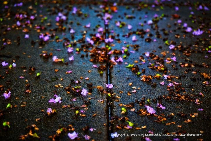 Wet sidewalk and flowers.