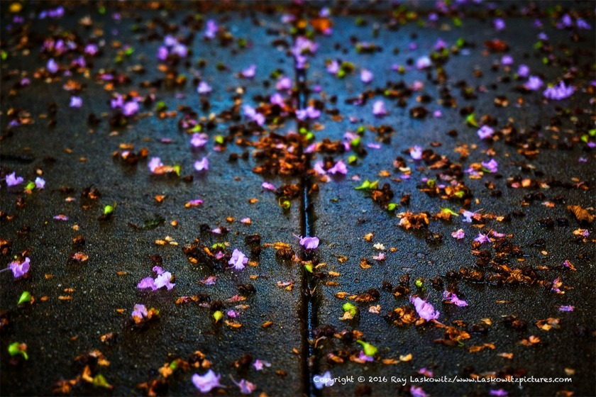 Wet sidewalk and flowers.