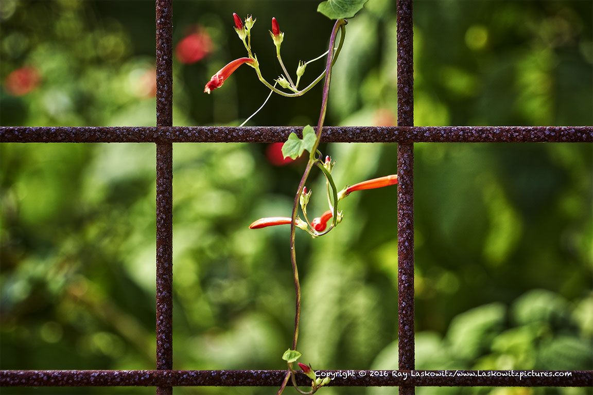 New growth and rust.