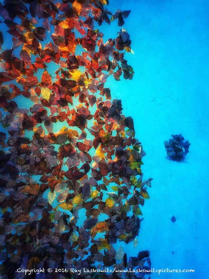 Autumn in the pool.