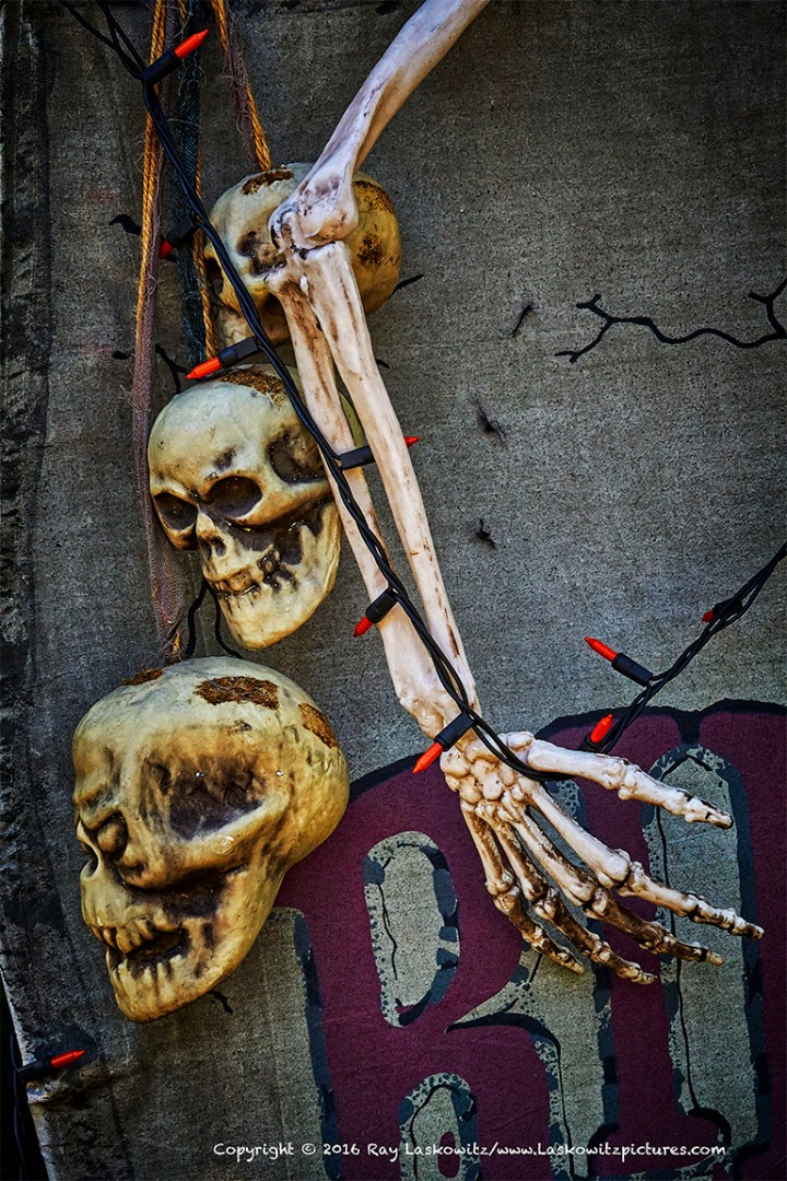 Skulls in a row.