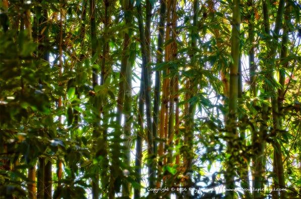 Glowing bamboo