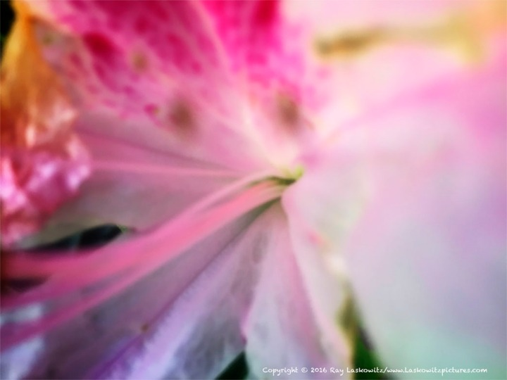 Soft pink.