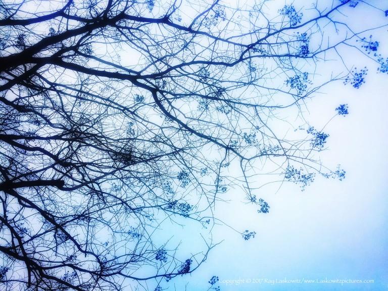 Winter softness.