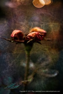 Dead flowers and changing seasons.