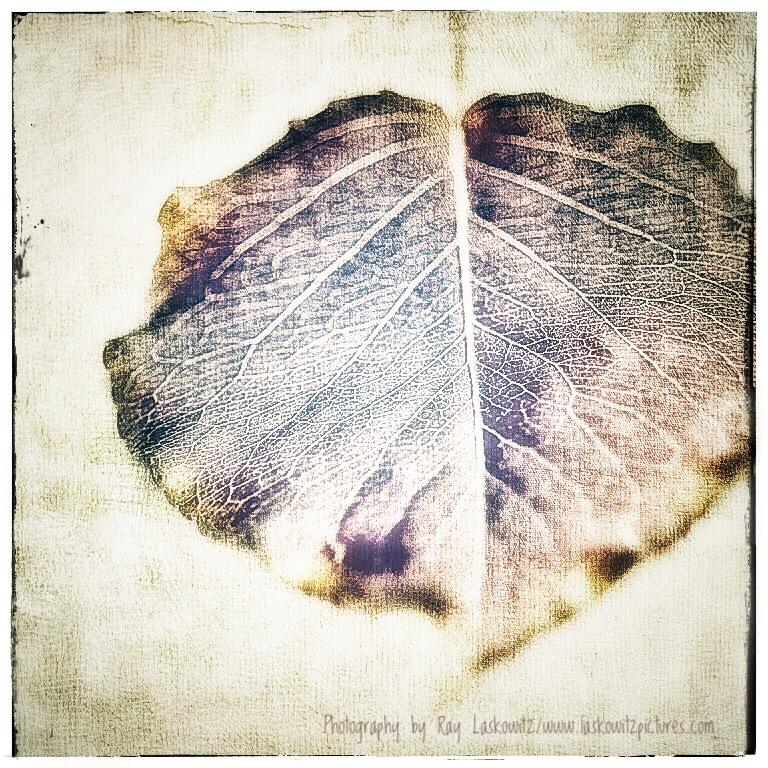 Fall Leaf in Art.