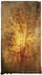 Golden light experiment.